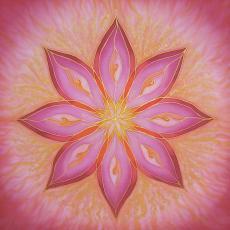 Vénusz virága mandala